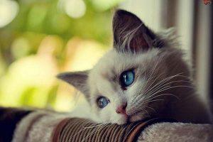 ¿Pueden los gatos deprimirse?