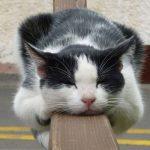 10 inconvenientes de adoptar gatos como mascotas