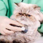 Calendario de vacunas para los gatos