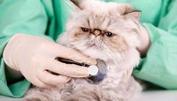Importante acudir al veterinario