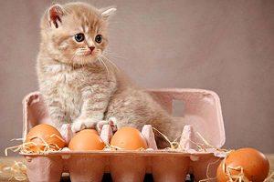 Conviene utilizar dosificadores de comida para gatos