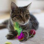 Los 10 mejores juguetes para gatos que previenen el sobrepeso y el estrés