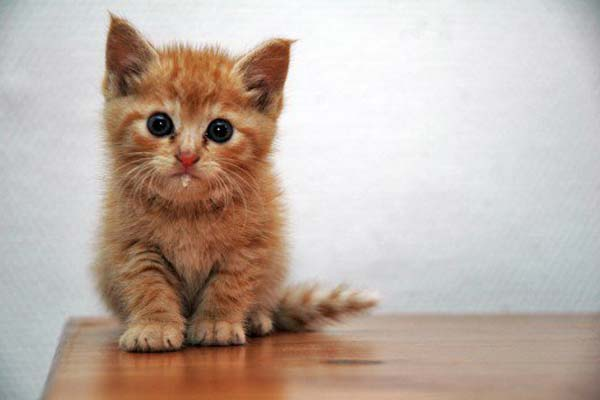 Ventajas e inconvenientes de los comederos automáticos para gatos. ¿Son necesarios?