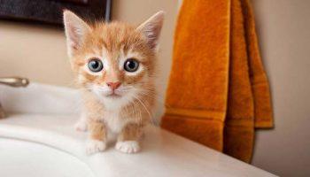 Informacion básica sobre gatos