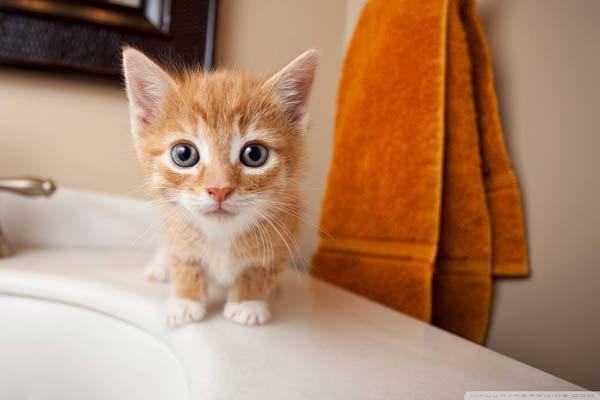 10 comportamientos típicos de los gatos y otros 10 preocupantes