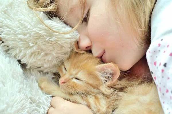10 consejos básicos para caerle bien a los gatos