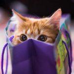 10 regalos ideales para los amantes de los gatos
