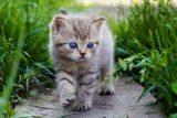 Cómo entender el lenguaje de los gatos