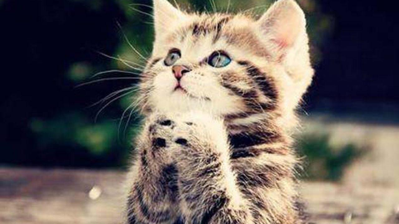 cosas que debes saber sobre gatos