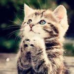 Las 10 cosas más importantes que debes saber de los gatos antes de tener uno
