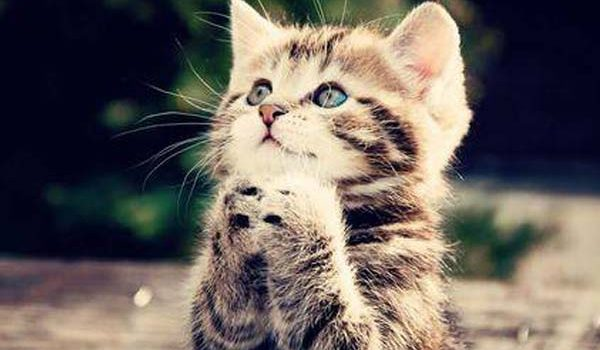 ¿Cuánto vive un gato?