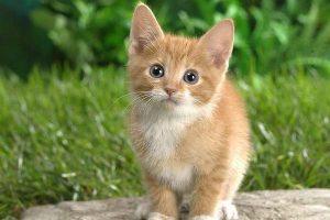 ¿Cómo hablan los gatos?