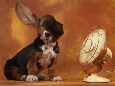 Los mejores ventiladores y enfriadores de aire a buen precio
