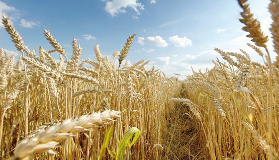 Beneficios de las harinas integrales