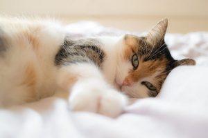 Comprar online camas para gatos