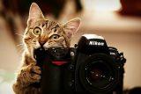 10 consejos para fotografiar gatos
