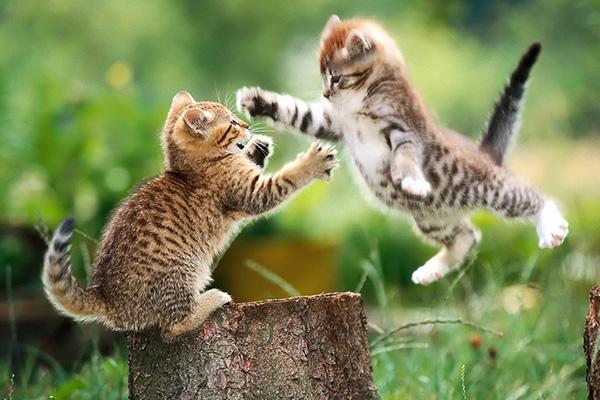 ¿Qué debo hacer si mi gato se vuelve agresivo? 10 consejos básicos