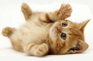 Cómo cuidar gatos