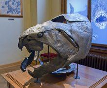 Fósil de Dunkleosteus, pez placodermo del Devónico