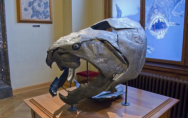 Dunkleosteus: el monstruo marino del Devónico