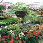 Mesas de cultivo para huertos urbanos. Elige la más adecuada