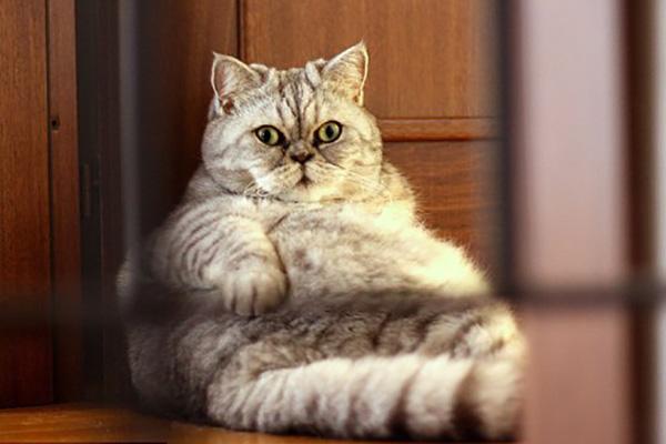 10 consejos para ayudar a los gatos con sobrepeso