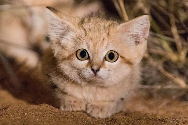 ¿Cuál es la mejor arena para gatos?