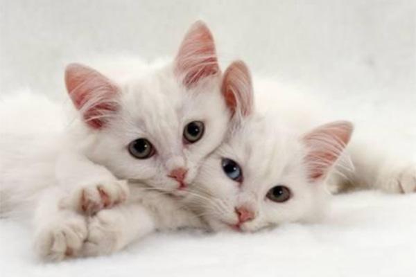 10 consejos para encontrar a tu gato si se ha perdido