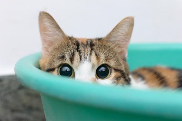 10 consejos para ayudar a gatos con miedo o problemas de timidez