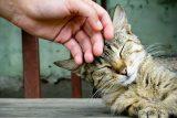 10 consejos para acariciar correctamente a un gato