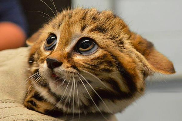 10 consejos para que tu hogar sea seguro para gatos