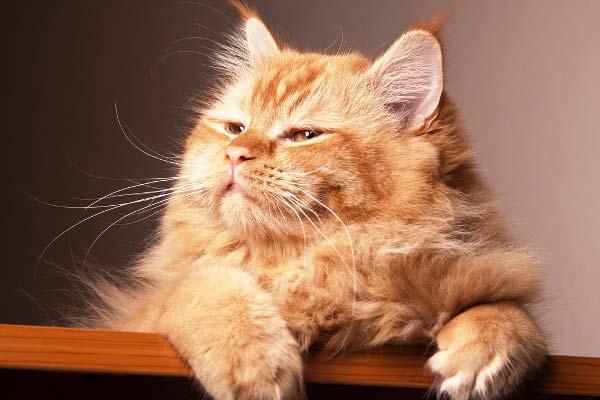 10 señales de que tu gato es feliz según los expertos
