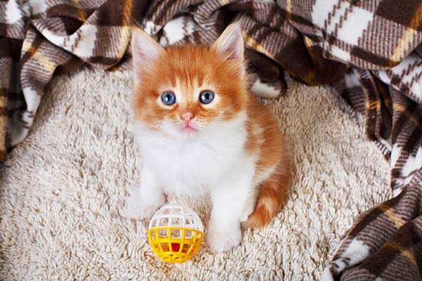 Diferentes tipos de juguetes para gatos