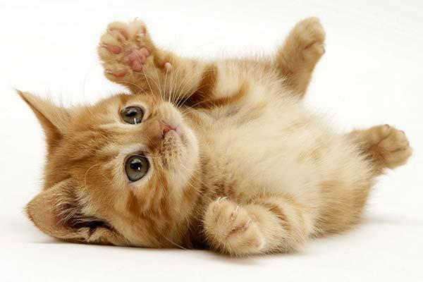 ¿Qué debes hacer si encuentras cachorros de gatos abandonados?