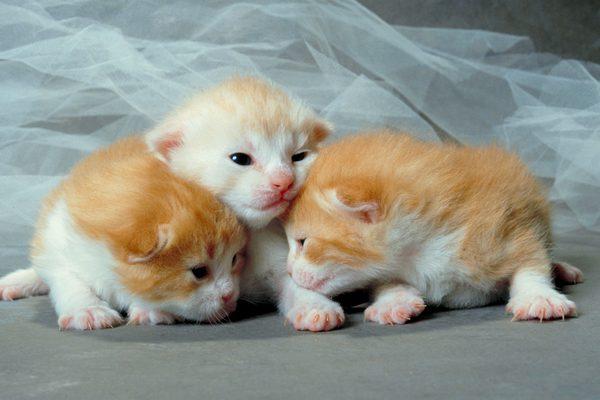 10 consejos básicos para cuidar a gatitos recién nacidos