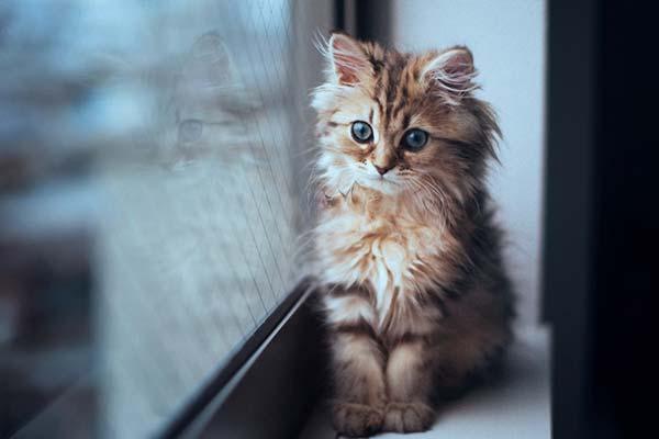 10 trucos para llevar a los gatos al veterinario sin que protesten