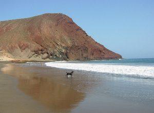 Las Islas Canarias tambien cuentan con diez playas caninas