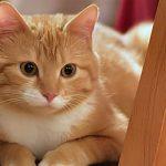 ¿Cómo debo colocar los accesorios de los gatos en mi casa?