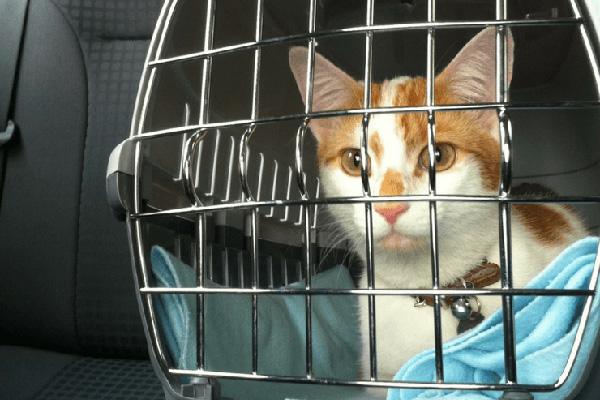 Los 10 mejores transportines para gatos