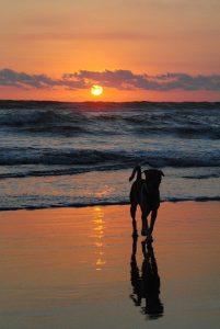La Comunidad valenciana es la que cuenta con un mayor número de playas para perros