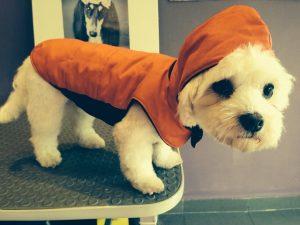 Los vestidos de microfibra para perro proporcionan comodidad a nuestra mascota