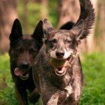 Accesorios para perros que facilitan su bienestar, confort y seguridad