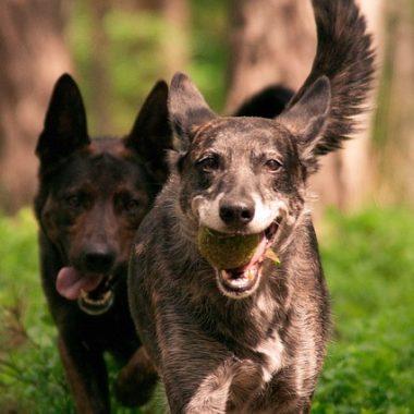 Los accesorios para facilitar a nuestros perros confort y bienestar estan muy de moda