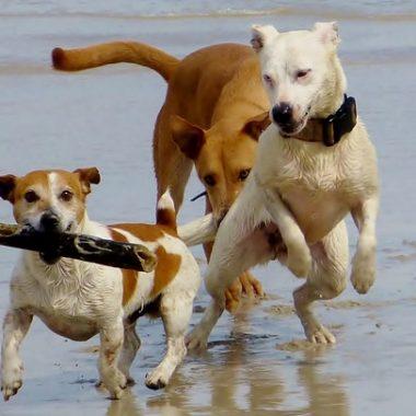 Más de 80 playas para perros existen en nuestras costas