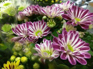 Planta de tardía y colorida floración
