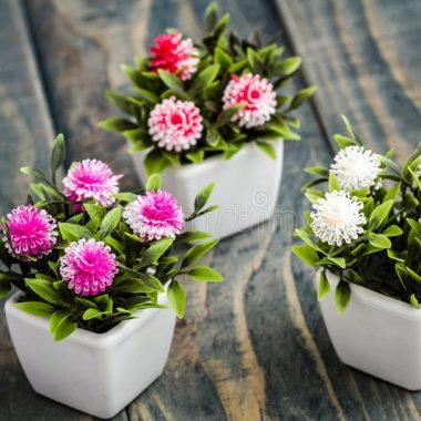 Planta de interior: una de las mejores soluciones para decorar tu casa