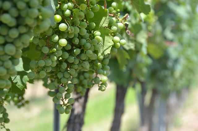Regiónes vinícolas