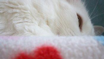 las necesidades de los felinos en el hogar