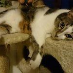 Claves para tener una buena relación con tu gato