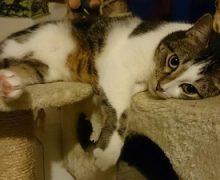 La relación con un gato se forja poco a poco